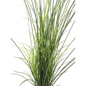 EUROPALMS Reed grass. 145cm #2