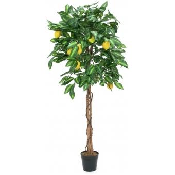 EUROPALMS Lemon tree, 150cm