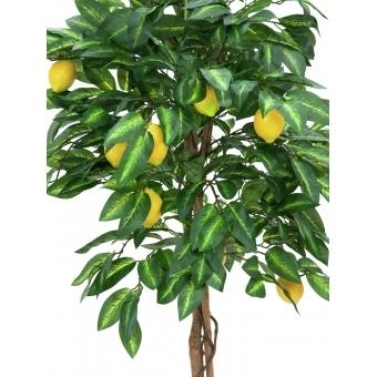 EUROPALMS Lemon tree, 150cm #2