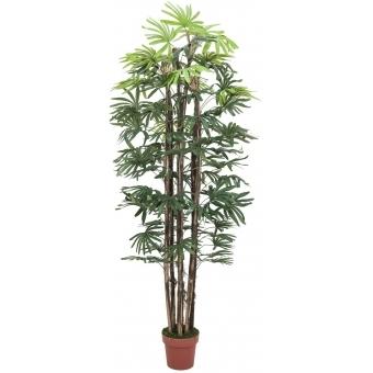 EUROPALMS Rhaphis palm, 180cm