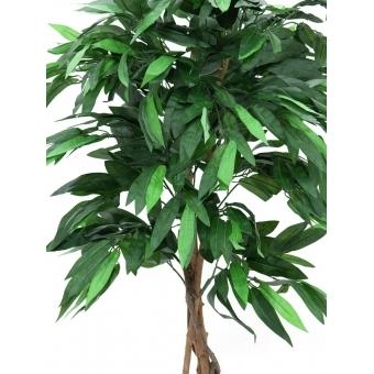 EUROPALMS Jungle tree Mango, 150cm #2