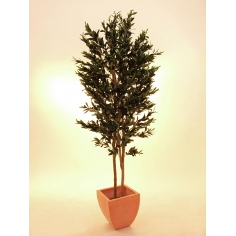 EUROPALMS Olive Tree with fruits, 2 trunks, 250cm #2