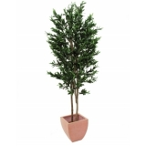 EUROPALMS Olive Tree with fruits, 2 trunks, 250cm