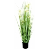 EUROPALMS Star grass, 105cm