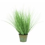 EUROPALMS Ornamental grass, 65cm