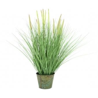EUROPALMS Ornamental blooming grass, 70cm
