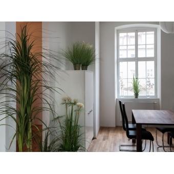 EUROPALMS Ornamental blooming grass, 70cm #4