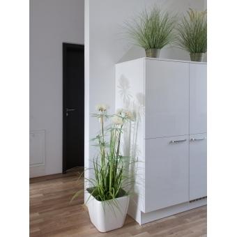 EUROPALMS Ornamental blooming grass, 70cm #5
