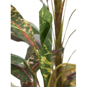 EUROPALMS Croton with coconut trunk, 180cm #3