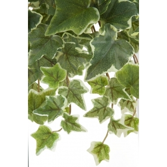 EUROPALMS Holland Ivy garland embossed 45cm #2