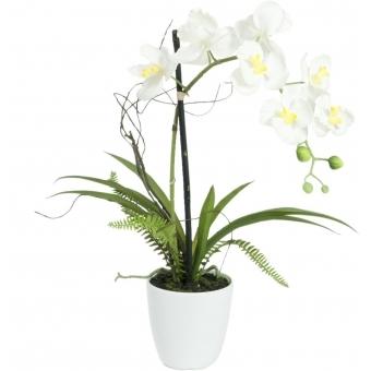 EUROPALMS Orchid arrangement 1