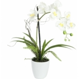 EUROPALMS Orchid arrangement 1