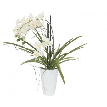 EUROPALMS Orchid arrangement 2