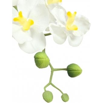 EUROPALMS Orchid arrangement 2 #2
