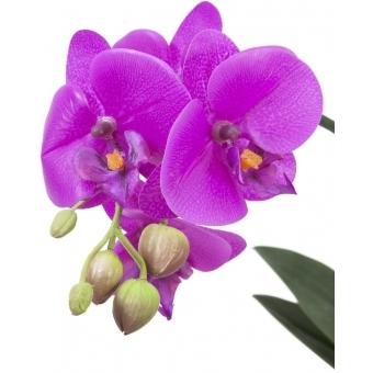 EUROPALMS Orchid arrangement 3 #2