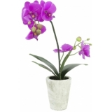 EUROPALMS Orchid arrangement 3