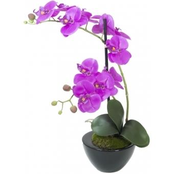EUROPALMS Orchid arrangement 4
