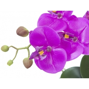 EUROPALMS Orchid arrangement 4 #2