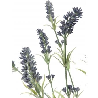 EUROPALMS Lavender bush 61cm #2