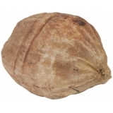EUROPALMS Wooden coconut