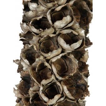 EUROPALMS Cacho coco ca. 120-190cm #2