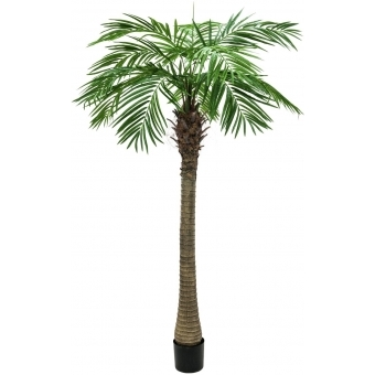 EUROPALMS Phoenix palm tree luxor, 210cm
