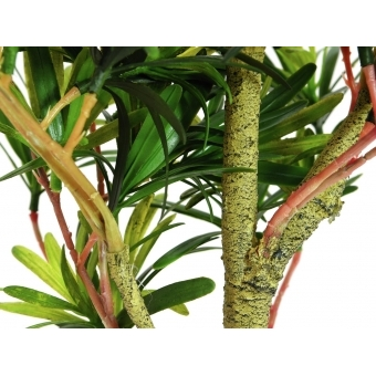 EUROPALMS Podocarpus tree, 90cm #2