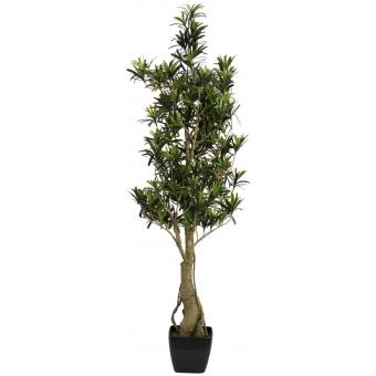 EUROPALMS Podocarpus tree, 115cm