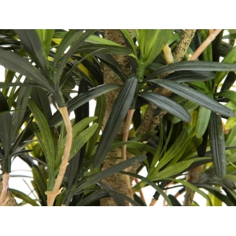 EUROPALMS Podocarpus tree, 115cm #2