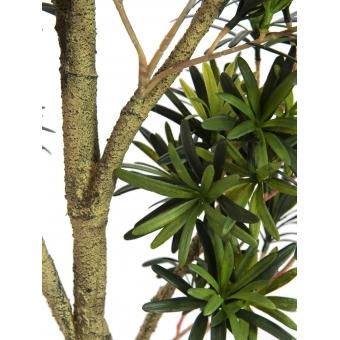 EUROPALMS Podocarpus tree, 150cm #2