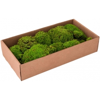 EUROPALMS Moss ball greenapple 10x #2