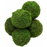EUROPALMS Moss ball set, 7cm, 6x