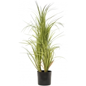 EUROPALMS Dracena bush, with black Pot, 80cm