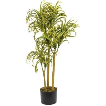 EUROPALMS Yucca palm with 3 trunks, 8 Heads, 90cm