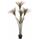 EUROPALMS Yucca palm with trunks, 150cm