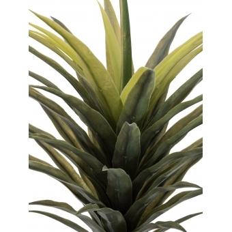 EUROPALMS Yucca palm, 165cm #2