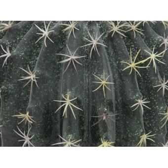 EUROPALMS Barrel Cactus, 34cm #2