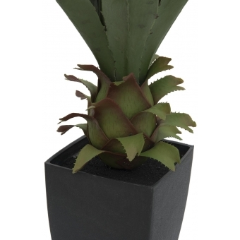 EUROPALMS Agave plant with pot, 75cm #2