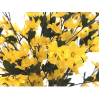 EUROPALMS Forsythia tree with 4 trunks, yellow, 120 cm #2