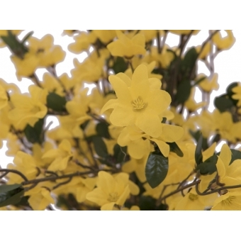 EUROPALMS Forsythia tree with 4 trunks, yellow, 150 cm #3
