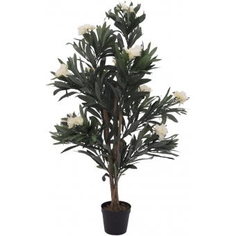 EUROPALMS Oleander tree, white, 120 cm