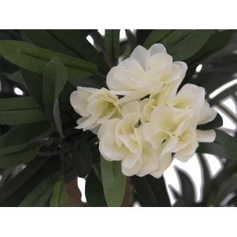 EUROPALMS Oleander tree, white, 120 cm #2