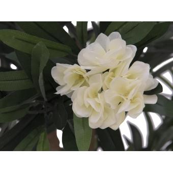 EUROPALMS Oleander tree, white, 120 cm #2