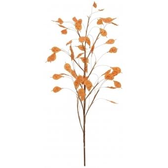EUROPALMS Aronien Branch (EVA), orange