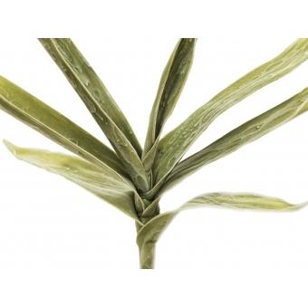 EUROPALMS Yucca Branch (EVA), green #3