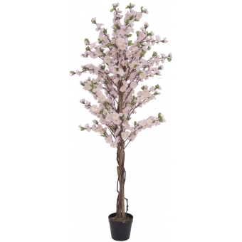 EUROPALMS Cherry tree with 4 trunks, pink, 150 cm