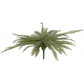 EUROPALMS Boston fern, green, 70cm