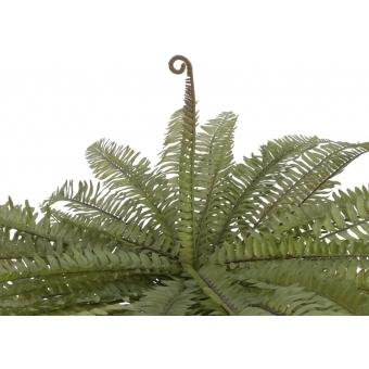EUROPALMS Boston fern, green, 70cm #3