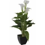 EUROPALMS Mini Calla, White, 43cm