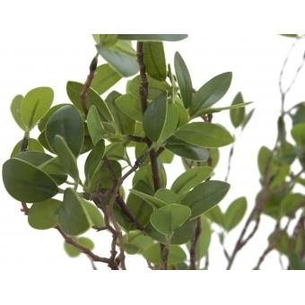 EUROPALMS Evergreen shrub 120cm #3